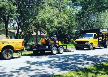 Tampa tree removal