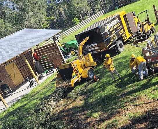 new port richey tree service