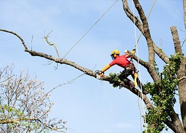 Tree-Trimming-Demossing