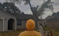 best tree company
