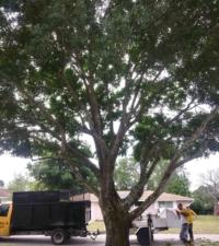 tree company