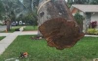 big tree removal near me