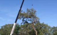 big tree removal tampa fl