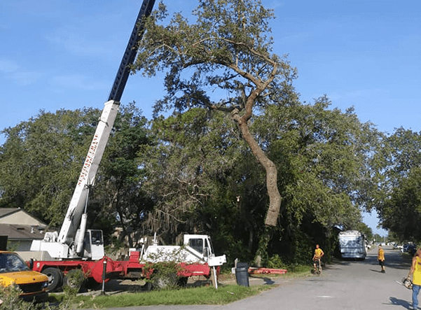 """Featured image for """"Top Reasons Why You Should Remove Dead Trees"""""""