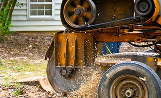 local-stump-removal-company