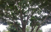 local-tree-trimming-services-near-me