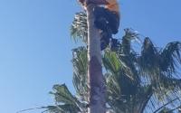 palm tree company near me