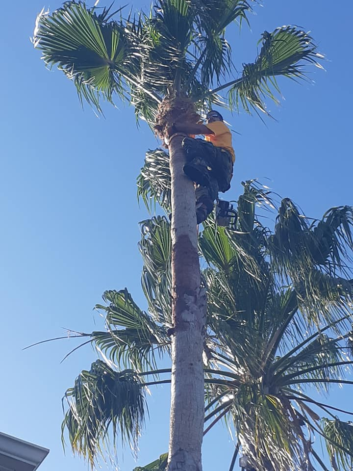 palm tree company near me