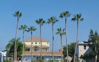palm-tree-shave-company