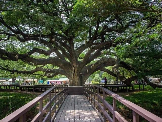 pasco-tree-care-oak-tree