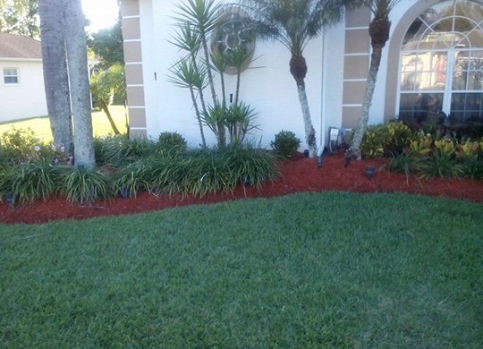 tree care Tampa FL