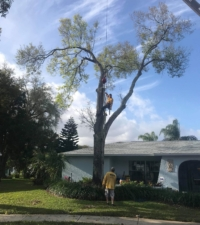 tree climbers near me