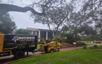 tree removal company