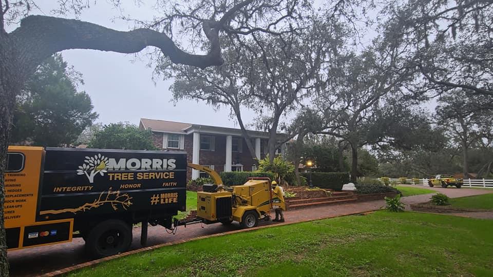 tree removal service near me