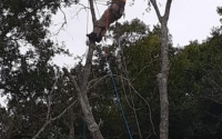 tree guy in tree