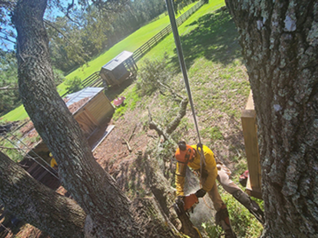 tree-removal-company-morries-tree-services