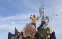 tree removal company tampa