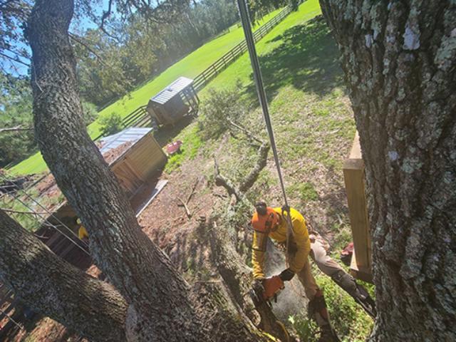 tree-removal-pasco