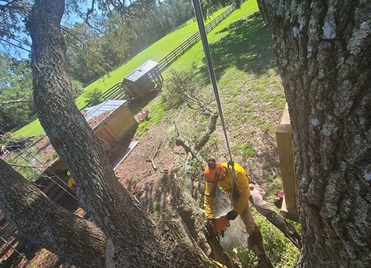 tree-removal-pasco