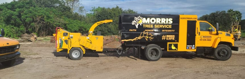 tree services trimming