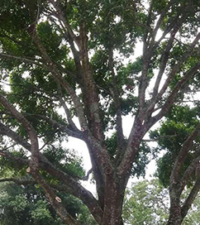tree-services-morris-tree-services