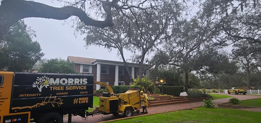 tree-trimming-services-pasco-county-florida